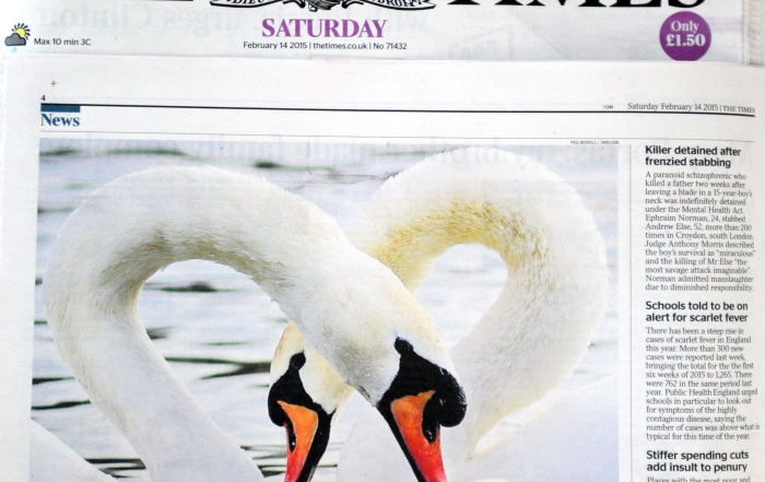SWAN TIMES