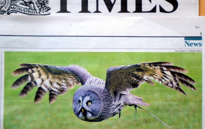 TIMES OWL