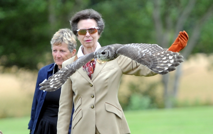 PRINCESS ROYAL BIRDS OF PREY7